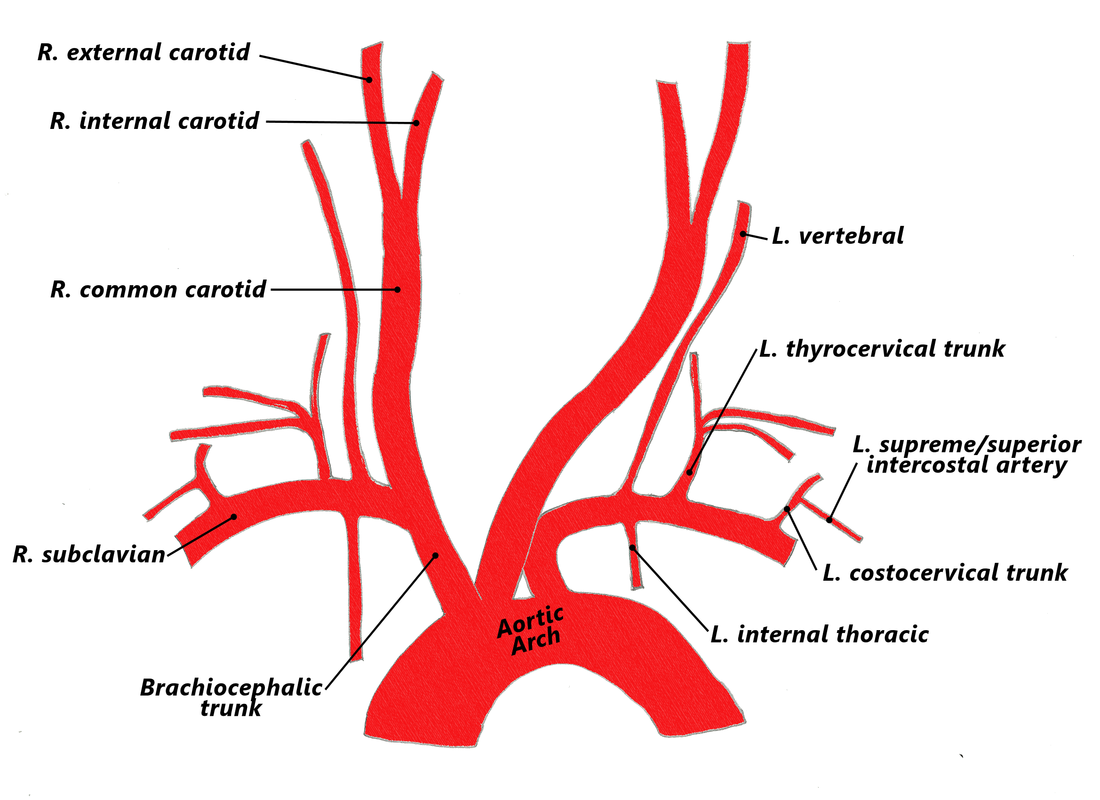 4 Arteries The Goofy Anatomist